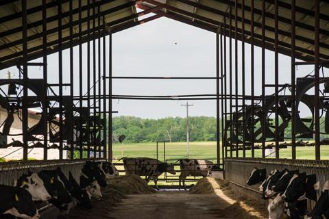 Meadow's cows Volvo press release
